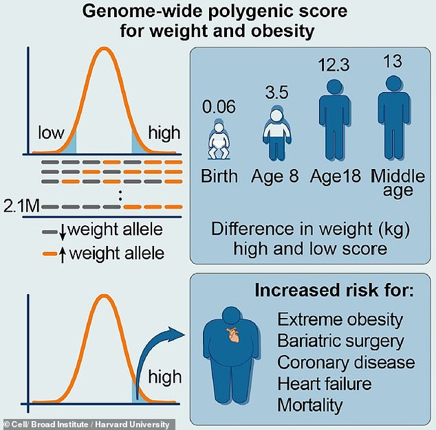 A new $50 DNA test used millions of genetic variations to accurately predict that 300,000 people would become obese - despite minimal differences in birth weights, a study graphic shows