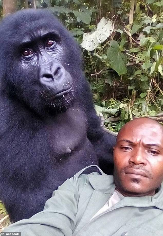 https://i0.wp.com/i.dailymail.co.uk/1s/2019/04/20/16/12514210-6942325-Patrick_Sadiki_lounges_with_one_of_the_gorillas_in_the_park_with-a-53_1555774810775.jpg?w=736&ssl=1