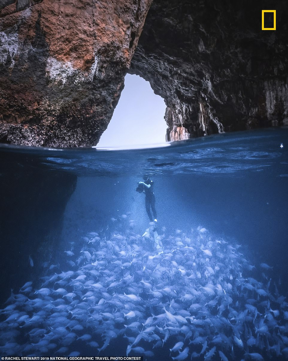 Rachel Stewart took this stunning shot of her best friend surrounded by a school of blue maomao fish. The duo were out diving around a marine reserve off the east coast of New Zealand in April this year when the scene presented itself. Rachel said: 'With numerous caves, tunnels and an abundance of marine life, the Poor Knights Islands marine reserve is a haven for many underwater species. A reminder that more protection of our ocean is needed'