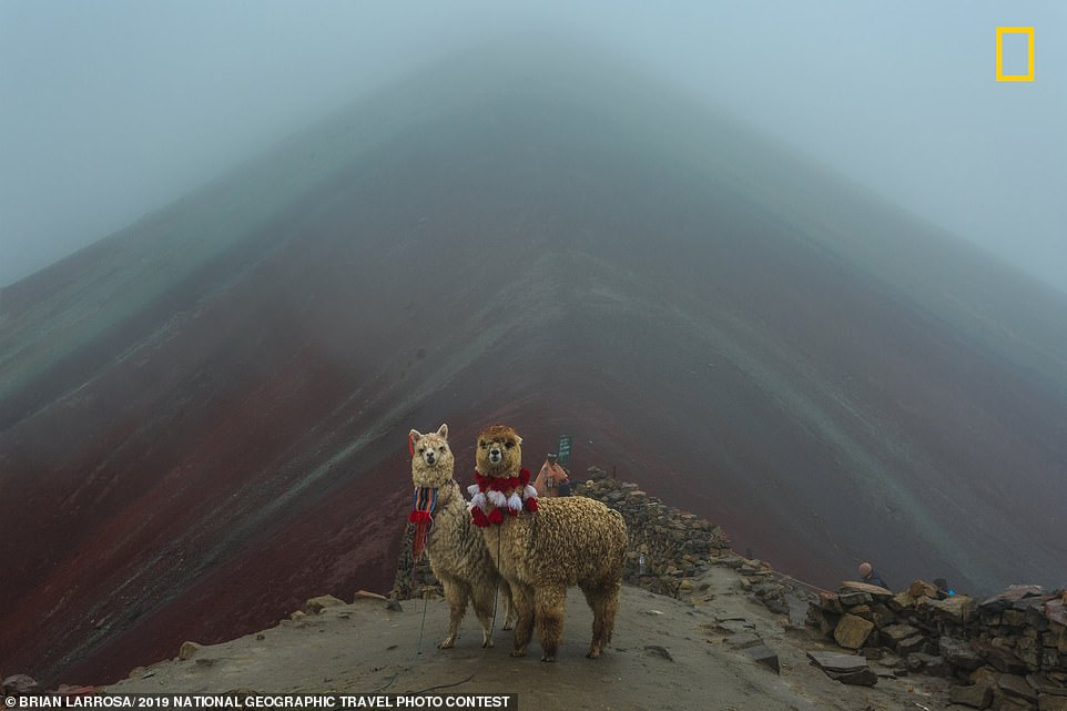 Instead of taking a bus tour of Rainbow Mountain in Peru,Brian Larrosa said he camped out the night before to be the first up at sunrise. Detailing his mini expedition, he said: 'That morning was full of fog, and when I arrived, I could barely see the seven-color mountain. I waited an hour for the fog to clear, but it didn't. On my way down, I passed this lovely alpaca couple wearing the Aymara culture colors - which made the wait worth it'