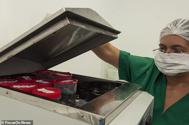 The fish skin is intensively sterilised (pictured) before it is deemed suitable for medical use