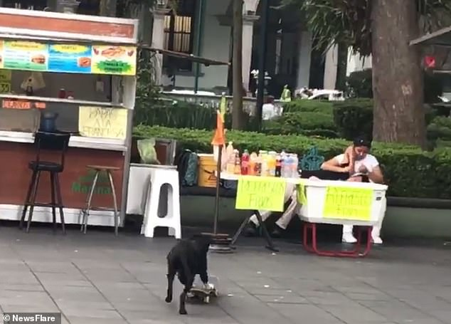 A man is spotted taking a nap on a woman's nap, unaware that a dog was pushing itself on a skateboard before accidentally stumbling into their table filled with drinks