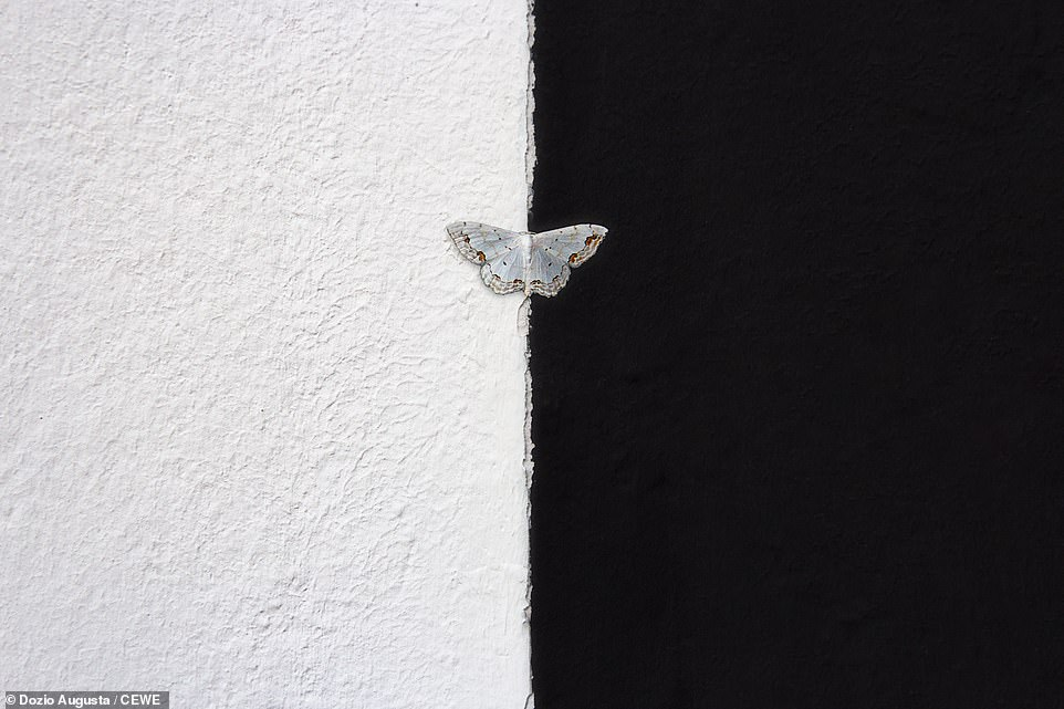 A butterfly straddles light and dark in this show-stopping abstract shot by Dozio Augusta
