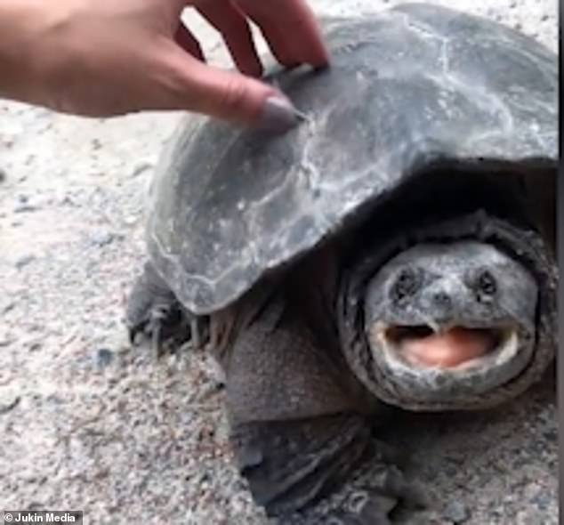 cute tortoise girl is