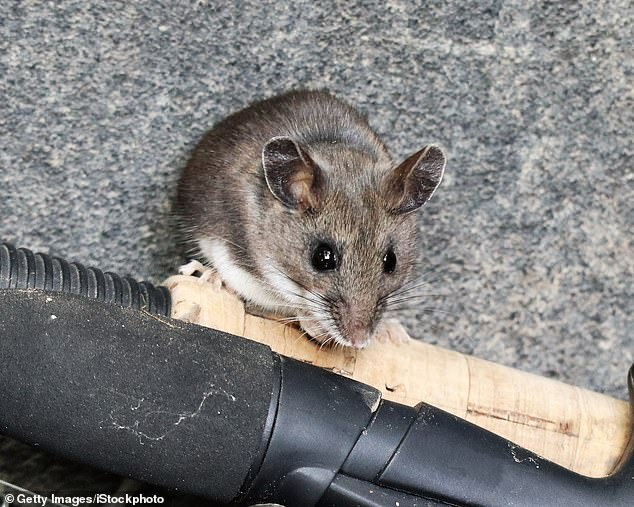 New Mexico woman, 42, dies after contracting deadly rodent disease ...