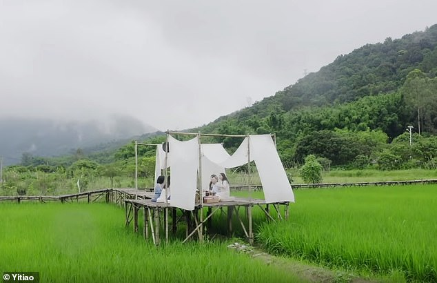 The friends, who are all tea lovers, decided to build the tea pavilion in the middle of the field, which connects to their lot via a bamboo walkway