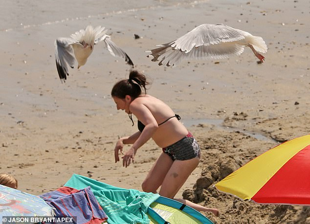 Seagulls were seen today dive-bombing a woman on the beach at Lyme Regis in Dorset