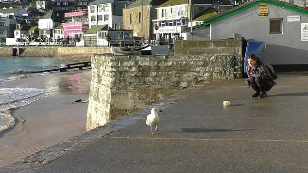 Looking at the seagull, it doesn't go for the chips