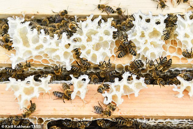 Bee populations have dropped dramatically across the glove leading many to sound the alarm