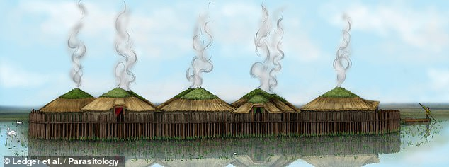 The Bronze Age settlement at Must Farm consisted of wooden houses built on stilts above the water. They believe the parasites were caught because the villagers foraged for food in the stagnant lakes and waterways around their homes
