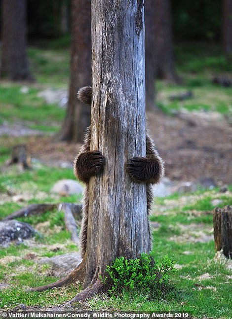 Hide and seek! This bear was a touch camera shy