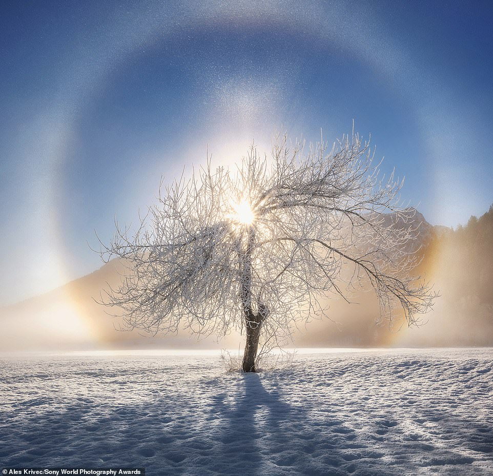 Ales Krivec, from Slovakia, has entered this ethereal image of the sun shining through an icy tree in the open competition's natural world and wildlife category