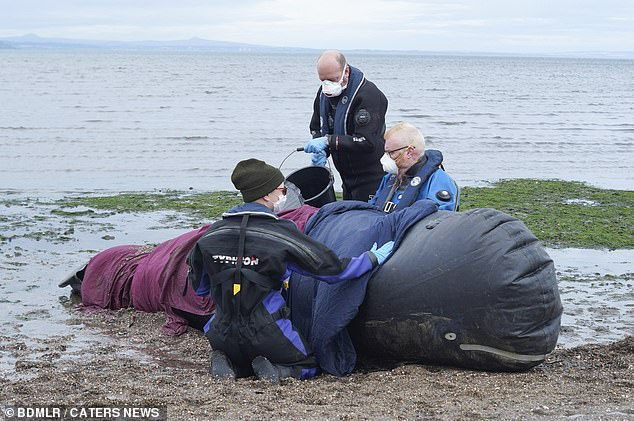Volunteers work on one of the inflatable whales at the training simulation in Scotland