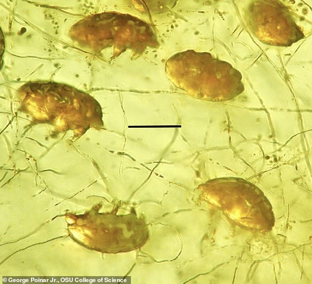 These tiny creatures are said to share some characteristics with mites and tardigrades, but are unlike anything seen before, leaving experts to believe they have found a new creature