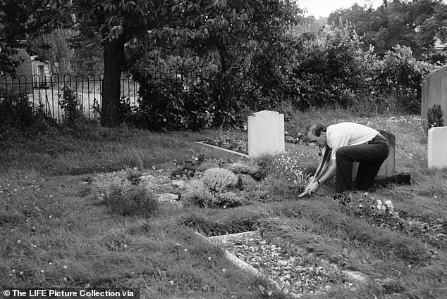 There was no vaccination available at the time with the first being licensed the following year in the U.S. Pictured: Roald Dahl smoking a pipe as he tends to a grave thought to belong to Olivia