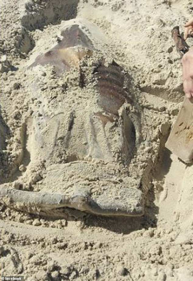 Sharing pictures of what appeared to be a semi-exposed animal online, the beach-goer said he wondered whether it was a dead body