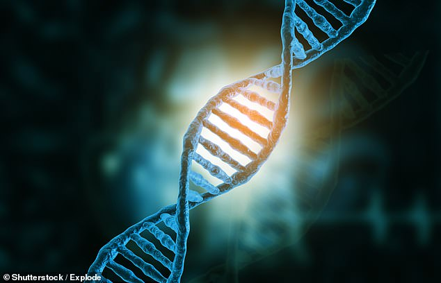 Harvard scientists analyzed the DNA of 125,000 people and identified 10 genes - including two key to how brain cells communicate - that they say dramatically raise schizophrenia risks