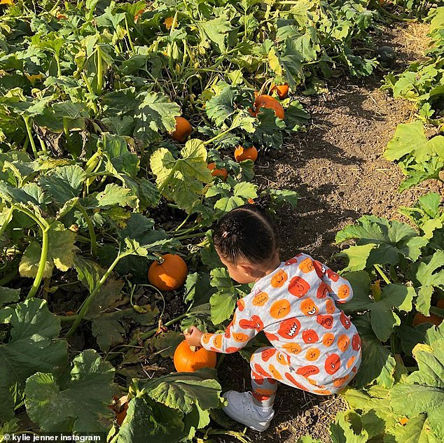 She liked the smaller ones: Here the child was seen picking up a smaller pumpkin with one hand