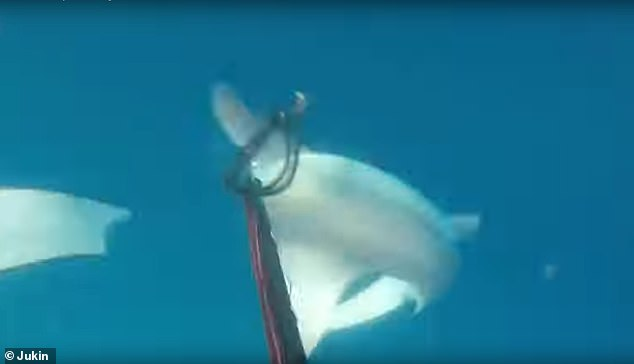 He poked the shark with his spear gun, scaring it and prompting it to turn tail