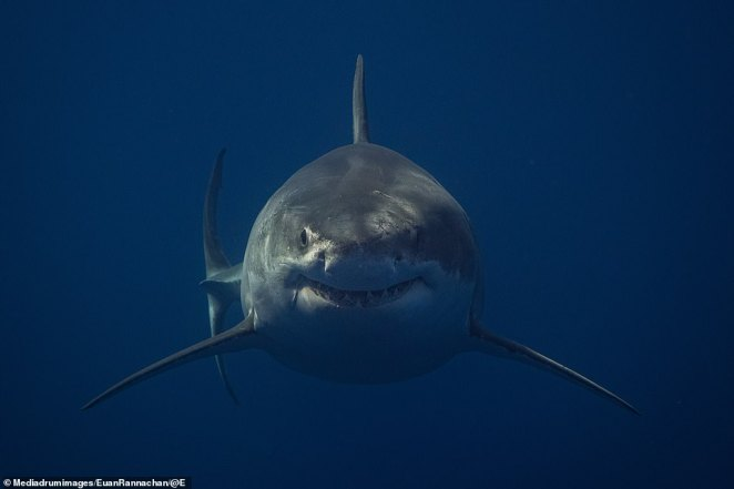 A shark's grin: enough to give most people a freight byt not Rannachan who says he doesn't even get scared when he is feet away from a big mouth