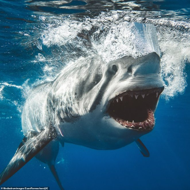 A deadly array of jet-black eyes and razor-sharp teeth. Photographer Euan Rannachan gets called 'crazy' by his peers because of his fascination with the deadly animals