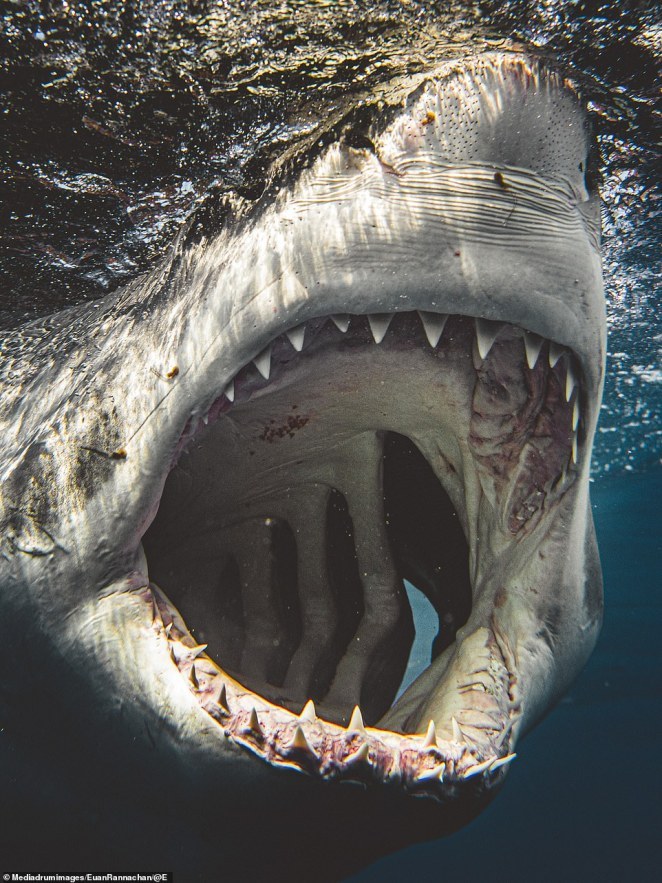 Rannachan suggets that meeting a shark in the water for the first time is akin to an 'out-of-body' experience