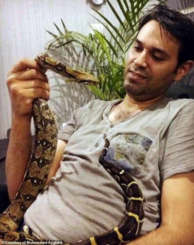 A job advertisement for a python hunter in Florida has attracted the attention of an Iranian man Mohammad Asghari, (pictured),  who used to catch snakes and play with them as a child