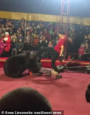 A 600lb bear can be seen attacking its trainer at a circus in Russia's Karelia region