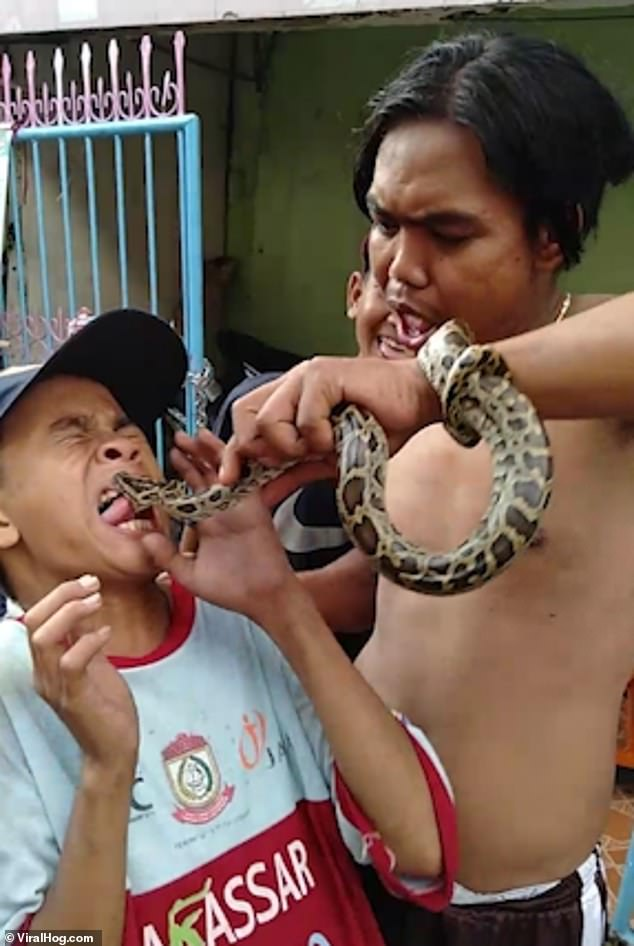 The young boy closes his eyes in horror as the snake bites his tongue in Makassar, Indonesia. Onlookers, including the older boy holding onto the snake then laugh loudly
