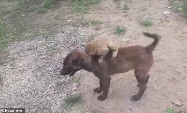 The little monkey clings onto the dog after it carries it to theRehli Police Station in Madhya Pradesh, India