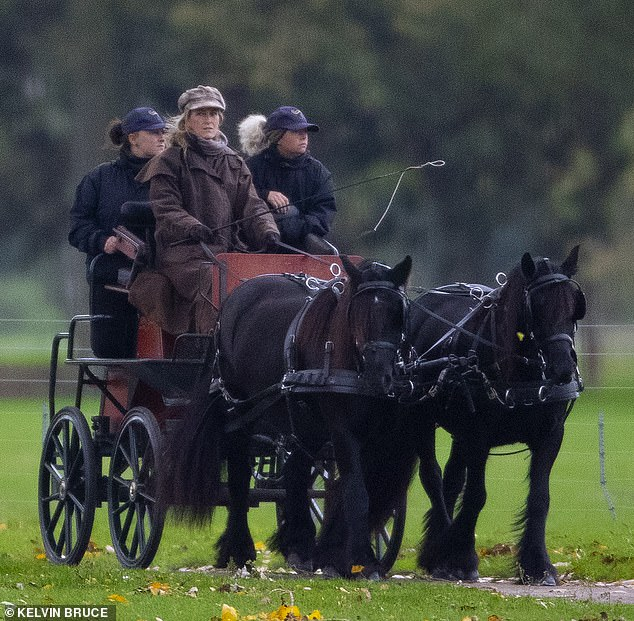 Sophie, 54, cut a casual figure as she drove a horse and carriage in the grounds of Windsor Castle today