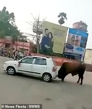 The bull was seen nudging the car with its horns inHajipur in the Vaishali district of Bihar in northern India