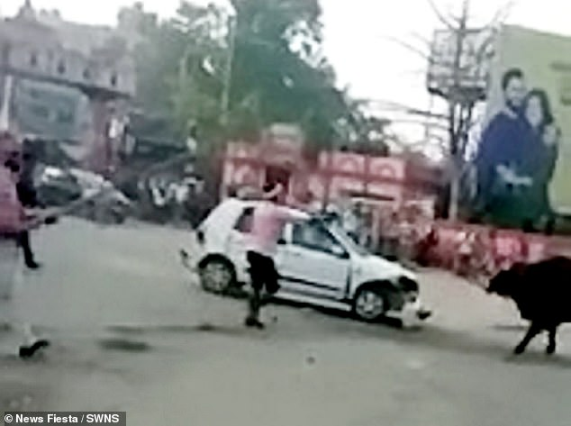 One local throws a glass of water over the bull which made him move away from the car while another man using a long wooden stick to keep the bull away