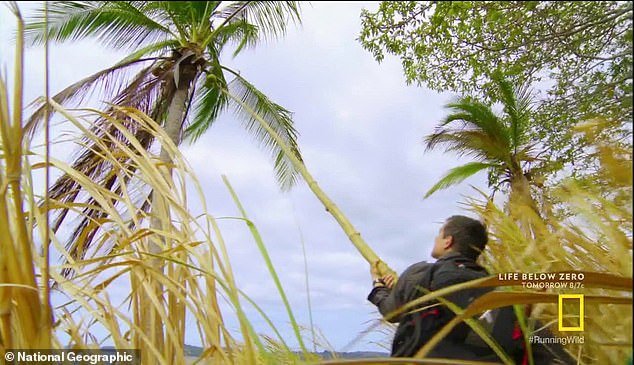 Coconuts: They tie a hook-like stick to the bamboo reed as they try to knock the coconuts down, and they knock two down