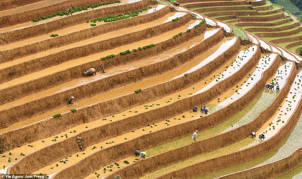 'Farming' by Diep Van:Shot of the rice fields in Northern Vietnam, where workers plant the rice seedlings for the upcoming harvest