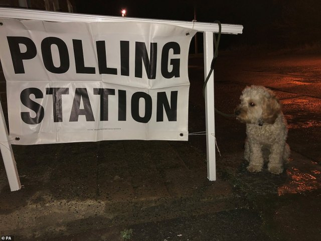 Reggie the cockerpoo puppy waits patiently in the dark outside a polling station in Chester-le-Street, County Durham this morning as the cute pooch waited for its owner