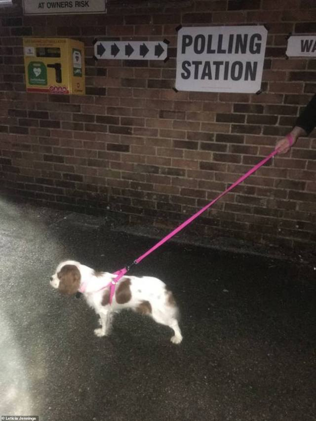 Penelope (pictured above) was also pictured outside a polling station this morning as her owner Leticia snapped this cute photo of her