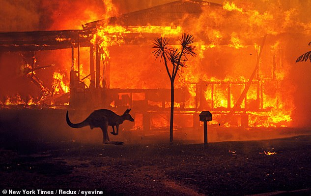 A kangaroo is seen skipping past a burning home in Lake Conjola on New Year's Eve