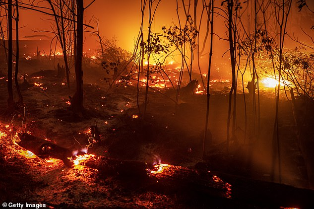 Fire burns peatland and forest inside Sebangau national park on September 14, 2019 in the outskirts of Palangkaraya, Central Kalimantan, Indonesia