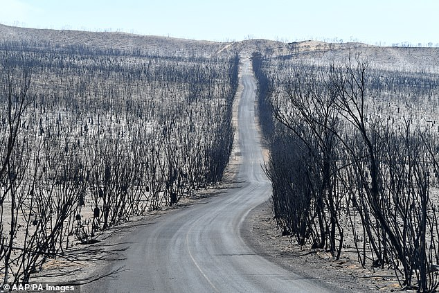 Kangaroo Island is unrecognisable after bushfires tore across the area earlier this month