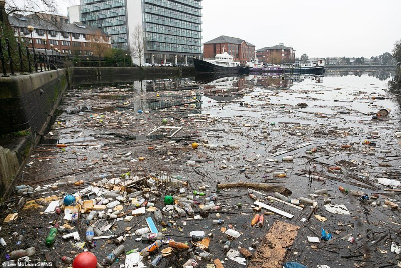 Threat to wildlife: This is part of the unsightly accumulation of litter that regularly clogs up the waternear the end of the Manchester Ship Canal, Salford