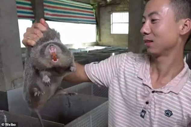 A man is pictured inside a live animal market in Wuhan, holding up a rat destined to be served as someone's dinner