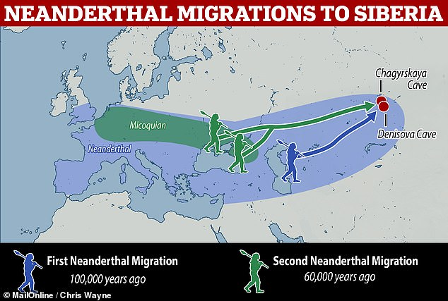 The researchers have concluded that there were two separate long-distance migrations of Neanderthals into Siberia, about 40,000 years apart