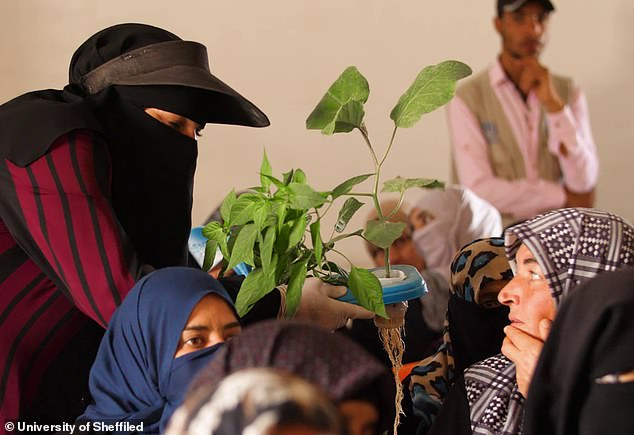 Women from the camp examine one of the plants grown in the plastic pots. The roots grow through the foam and in a solution of nutrients