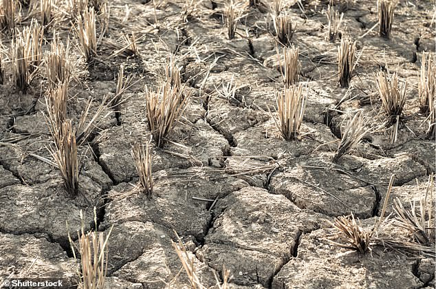 Cracked and infertile ground because of drought, partly due to a shrinkingITCZ, is casuing mass migrations in Central America
