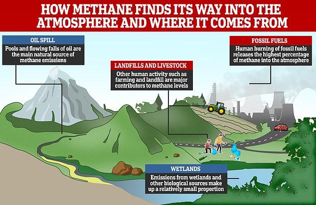 Además del ganado, las fuentes de metano incluyen combustibles fósiles como carbón, derrames de petróleo y la descomposición de desechos orgánicos en los vertederos de desechos sólidos municipales.