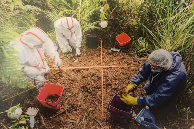 Her body was later found in a suitcase buried in a shallow grave in a forested area outside Auckland. Pictured: Forensic examiners are pictured marking out the area where the suitcase containing Grace's body was buried