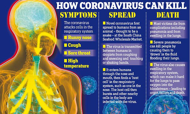 How does the coronavirus attack the human body? | Daily Mail Online