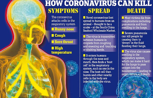 How does the coronavirus attack the human body?   Daily Mail Online