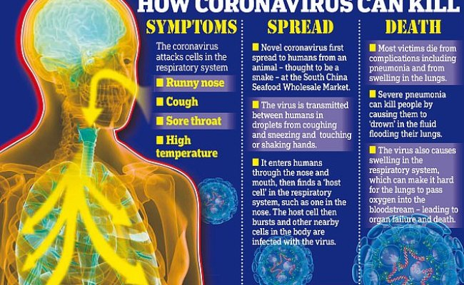 How Does The Coronavirus Attack The Human Body Daily